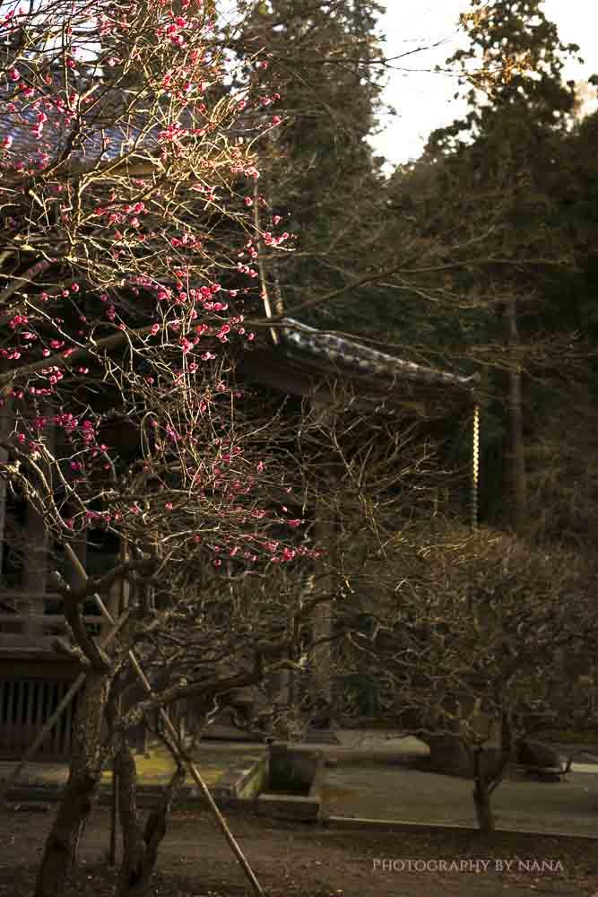 鎌倉_MG_8710