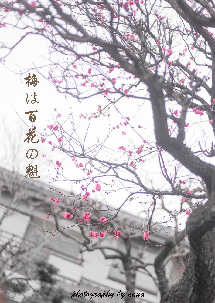梅_MG_4673