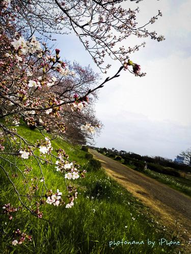 多摩川ラン_4425-3