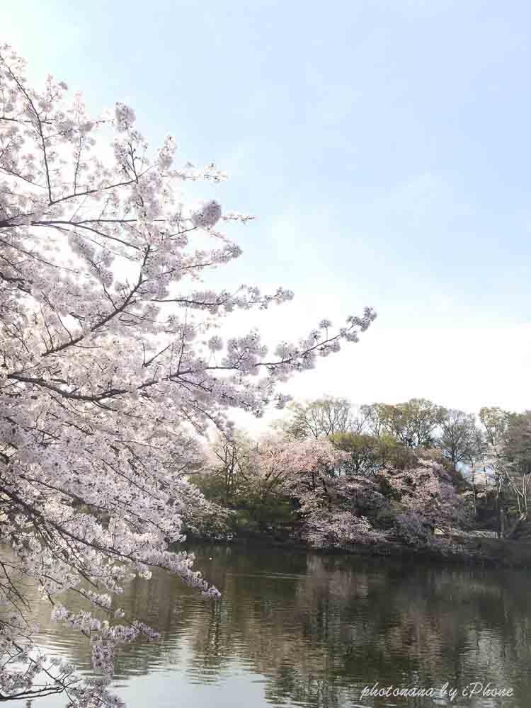 桜S__4415500のコピー