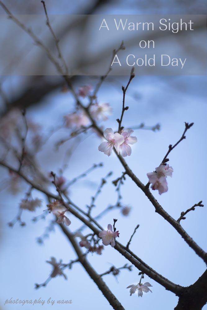 冬_MG_8987