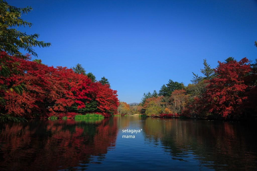 軽井沢 IMG_6426