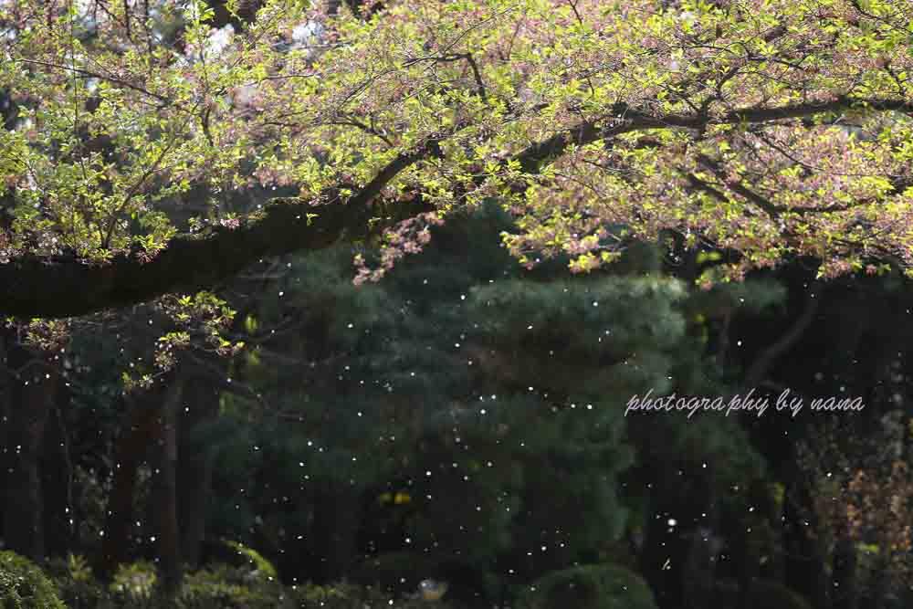 馬事公苑_MG_1623