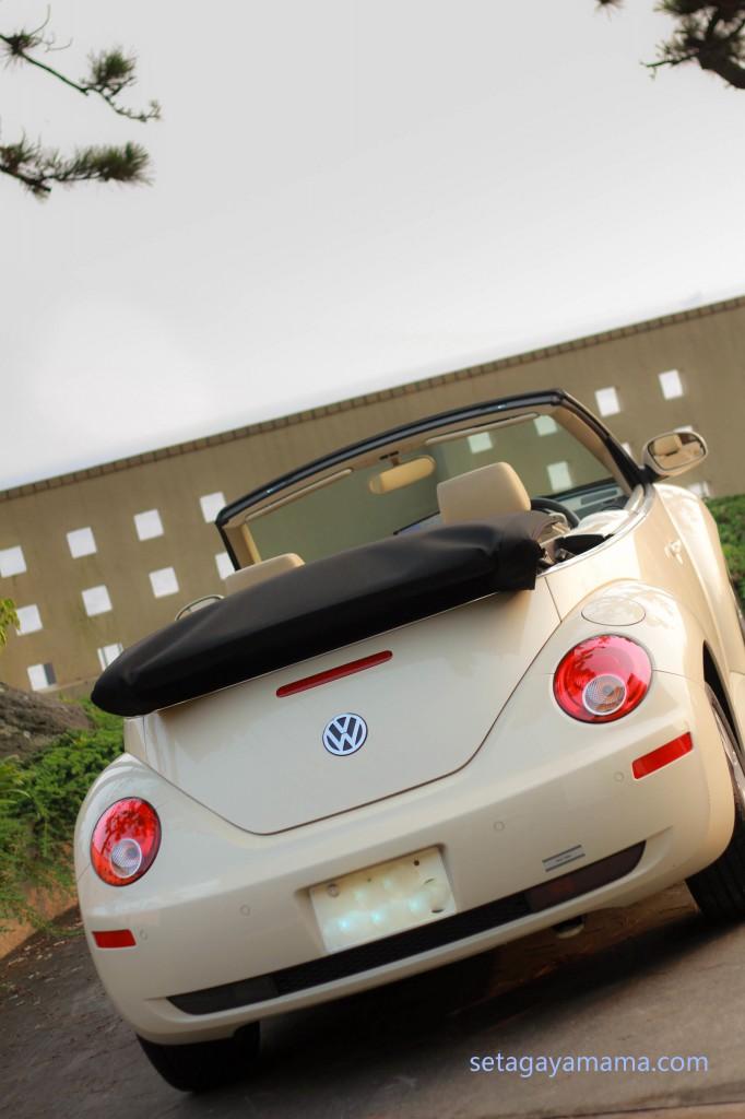 Beetle IMG_7615