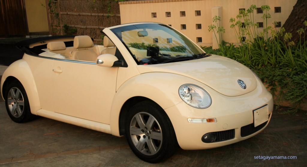 Beetle IMG_7624