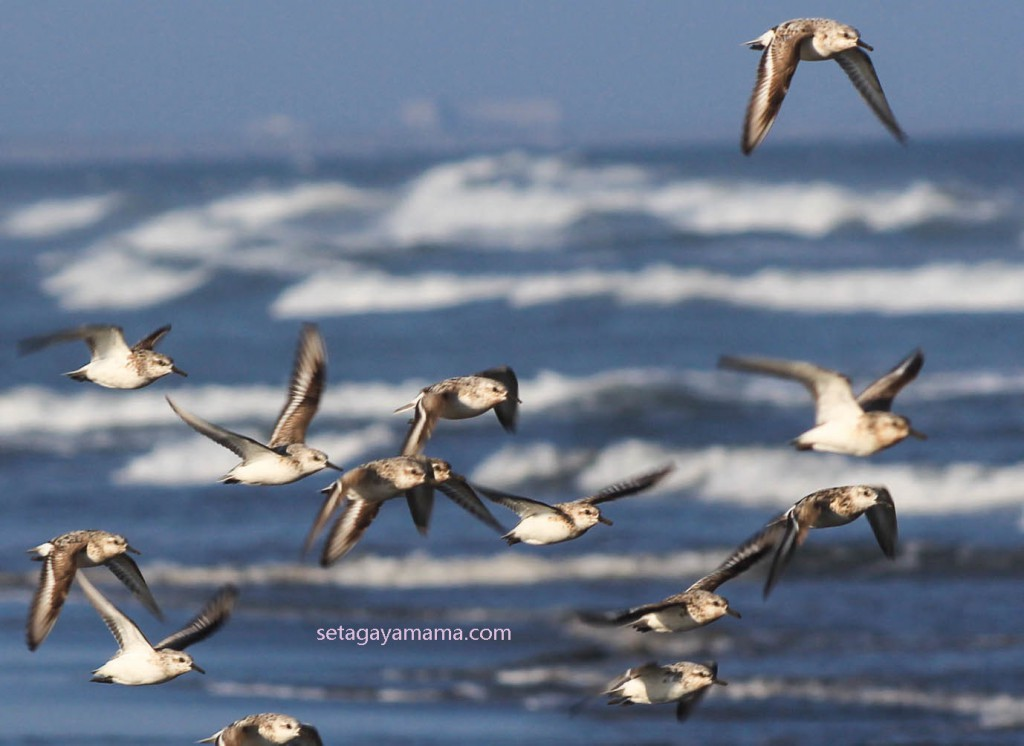 Birds IMG_8259
