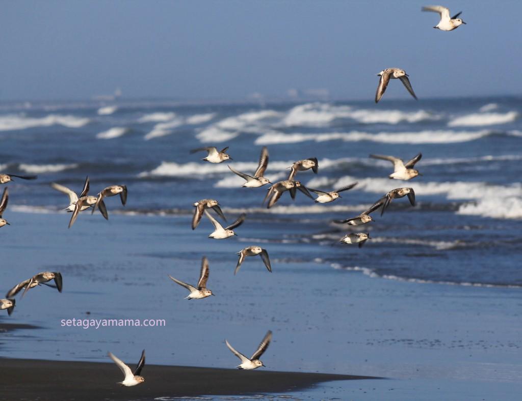 Birds IMG_8259-2