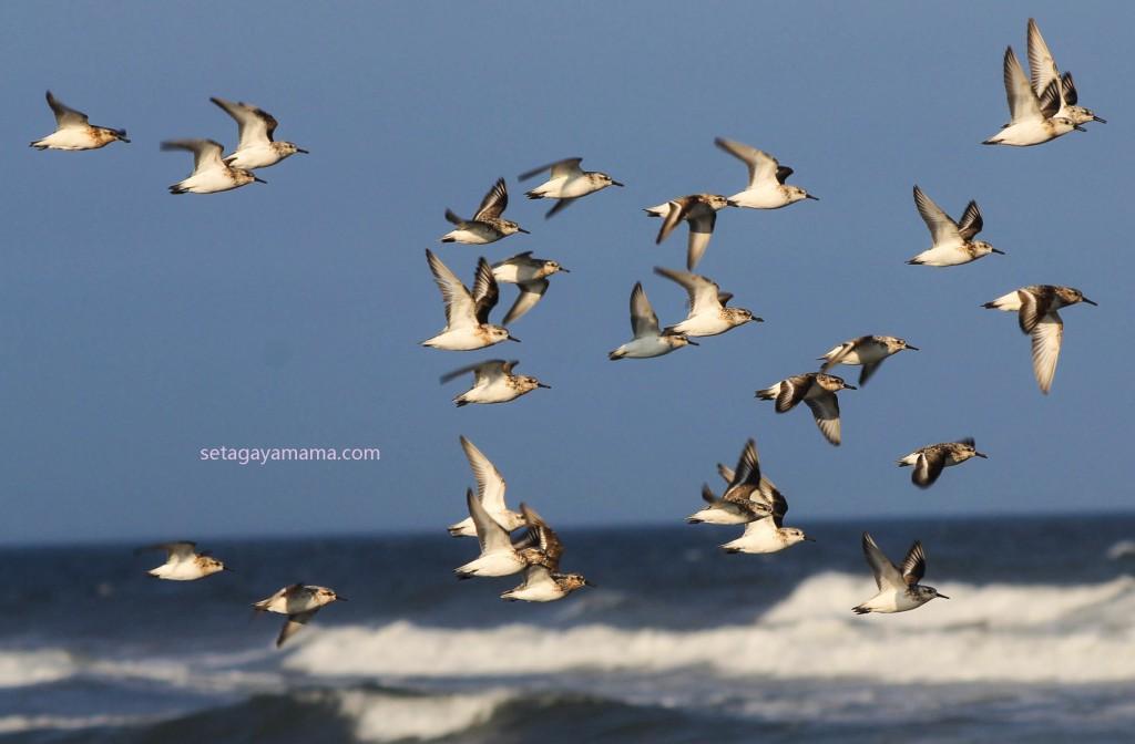 Birds IMG_8261-2