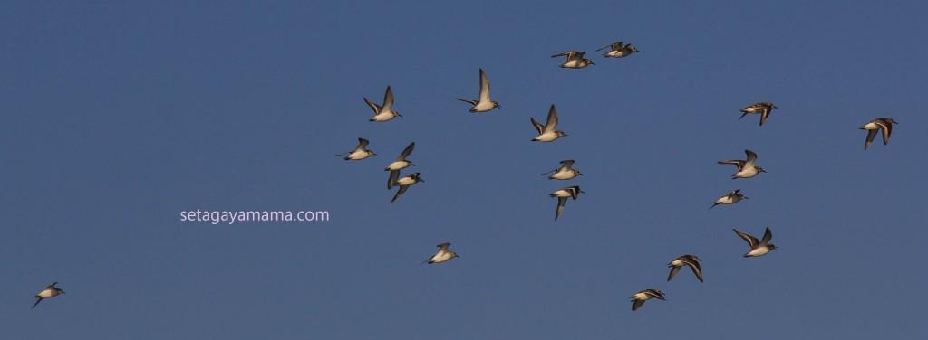 Birds IMG_8265