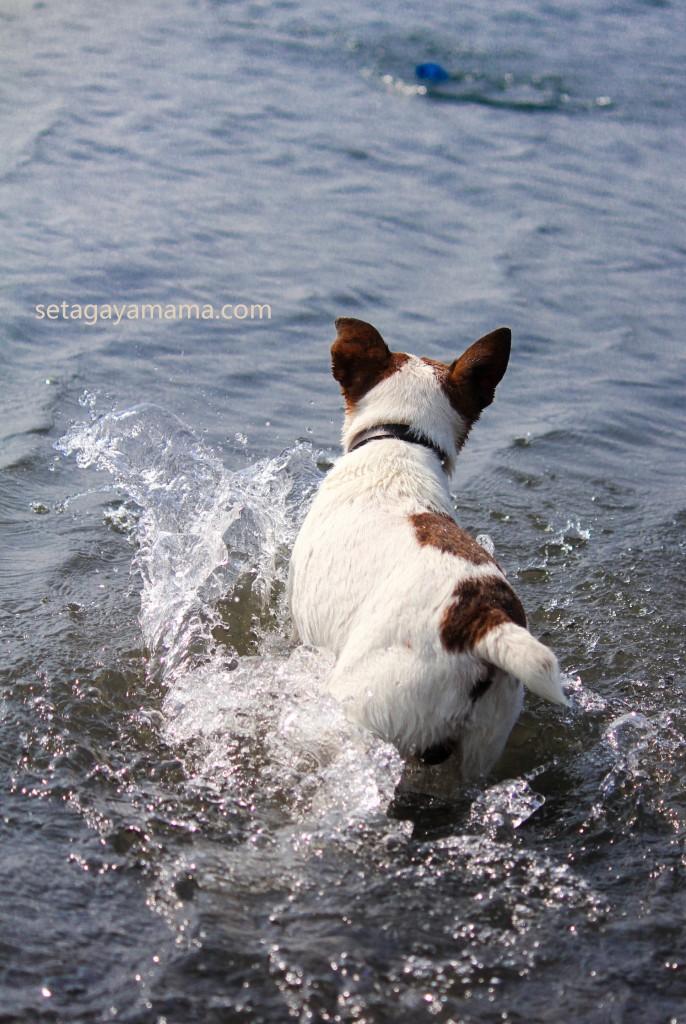 Dog IMG_7069