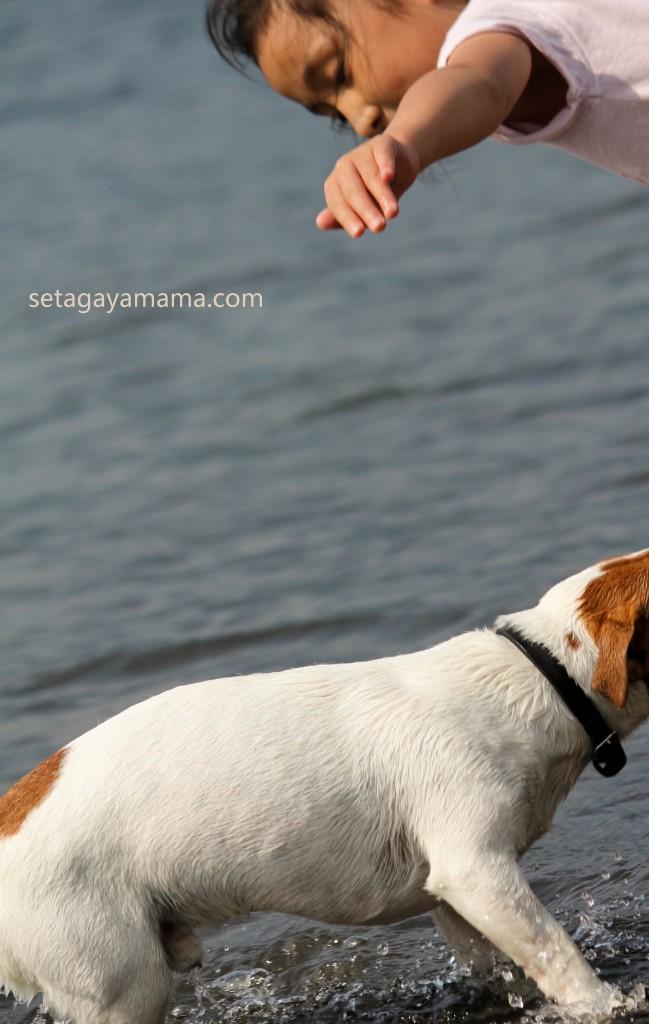Dog IMG_7093