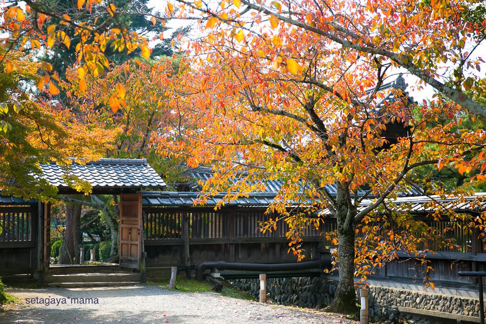 Kyoto _MG_0304