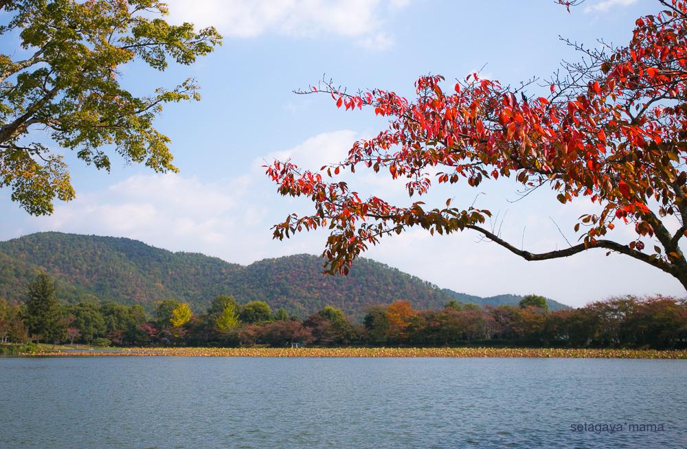 Kyoto_MG_0282