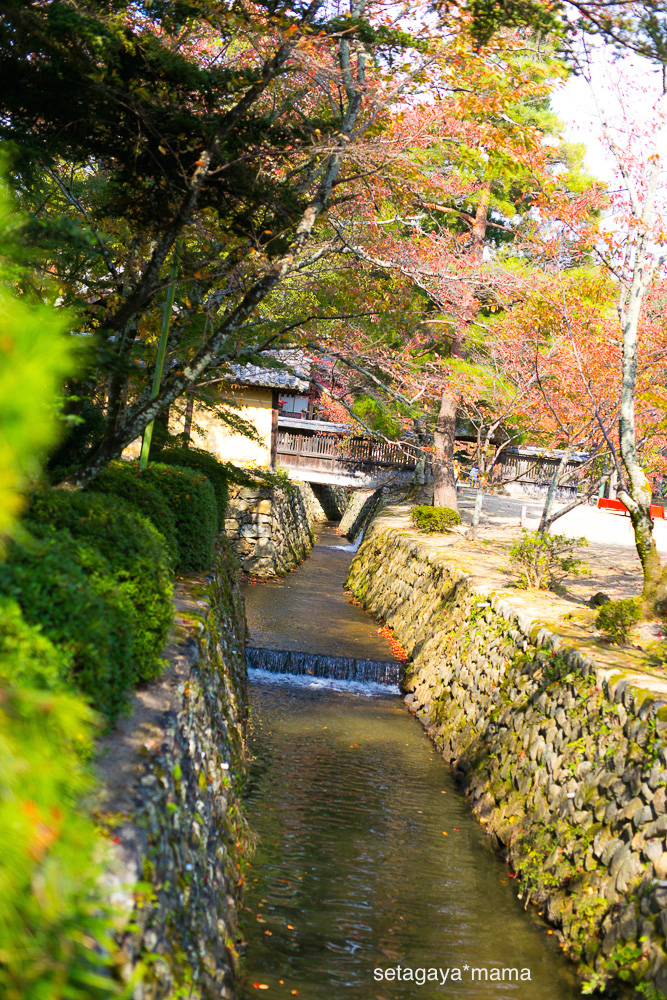 Kyoto_MG_0335