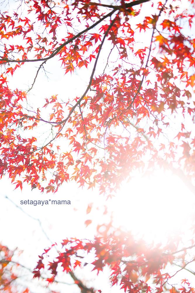 Kyoto_MG_0361