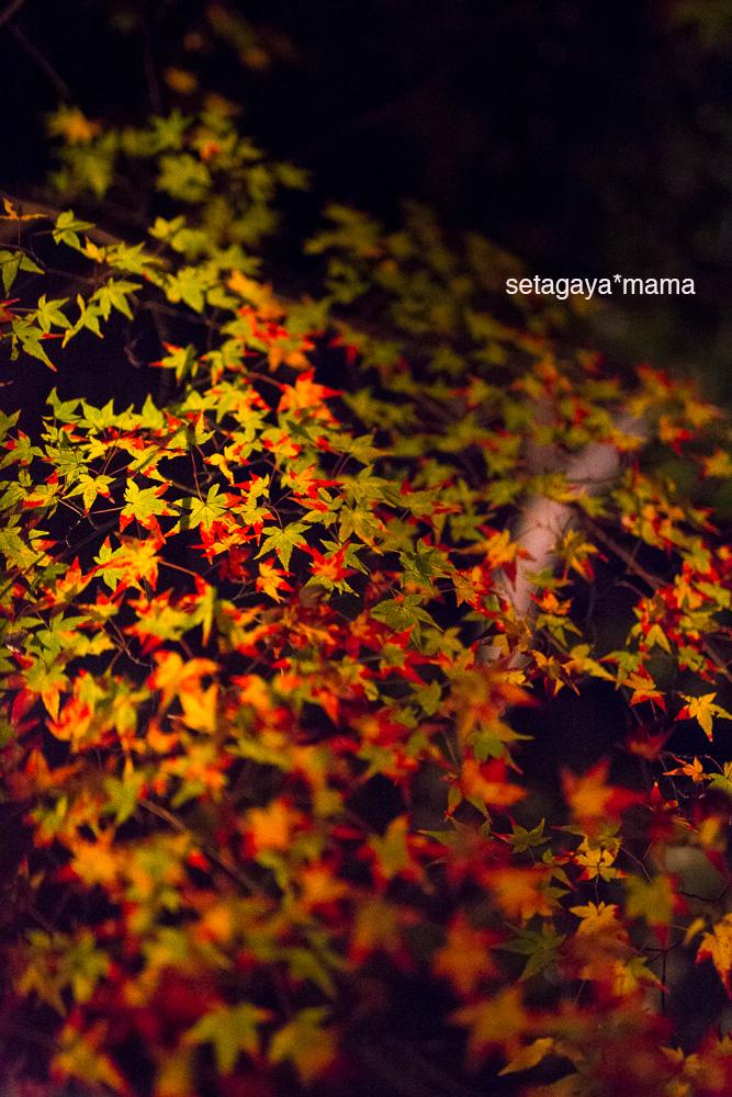 Kyoto_MG_2045