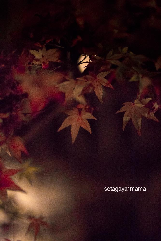 Kyoto_MG_2051