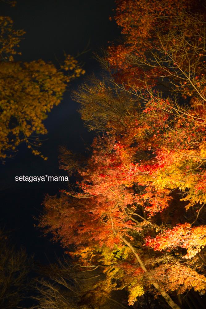 Kyoto_MG_2080