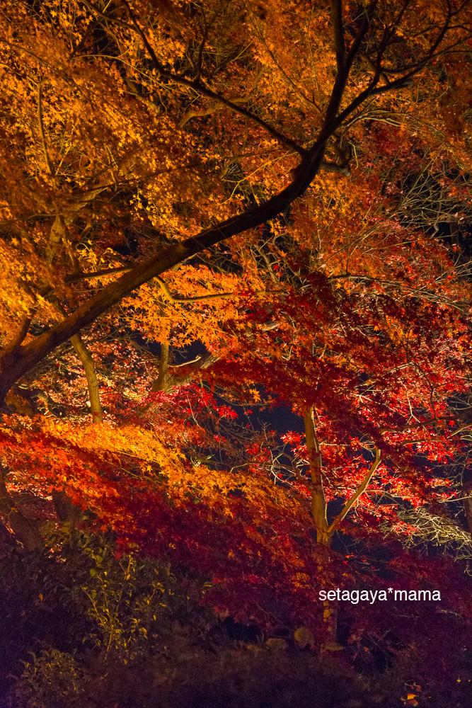 Kyoto_MG_2113