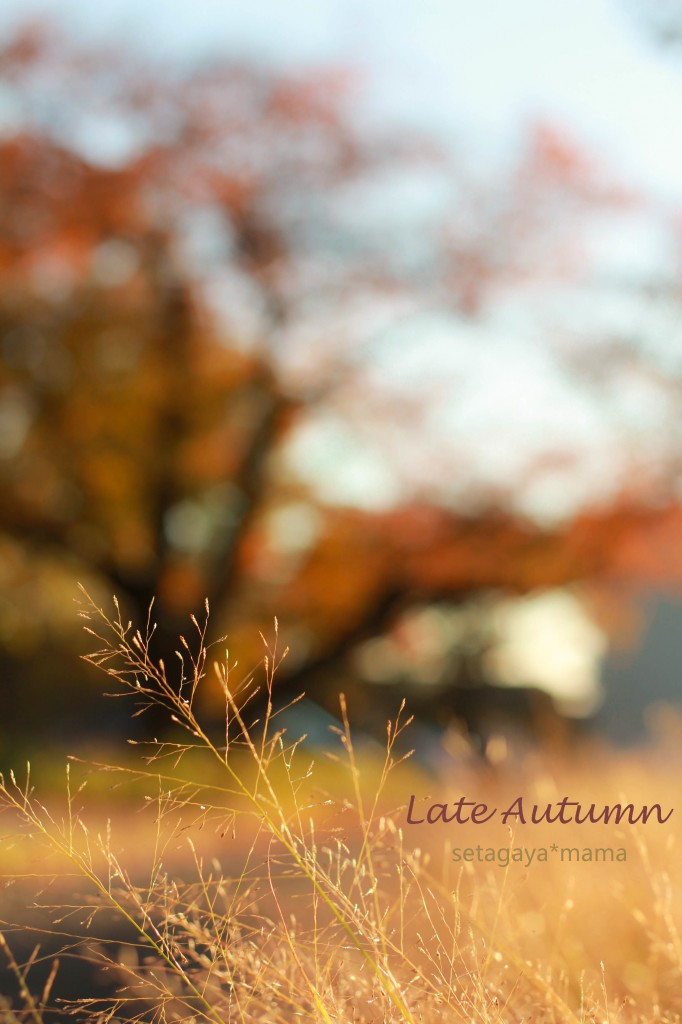 Late Autumn IMG_8650