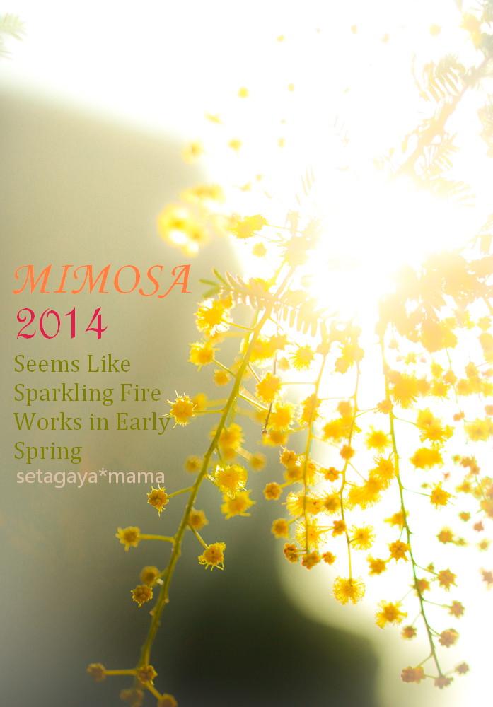 MIMOSA 2014 _MG_4409