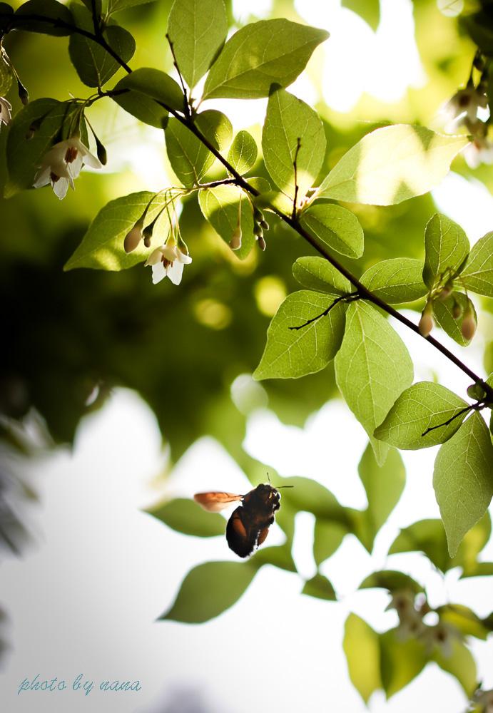 May-garden_MG_2396