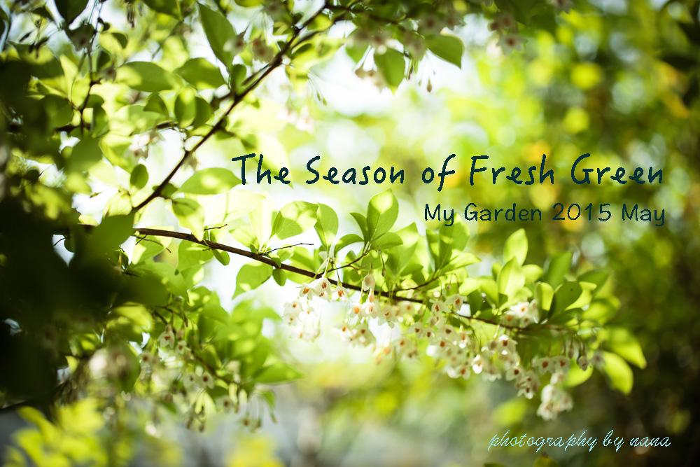 May-garden_MG_2401