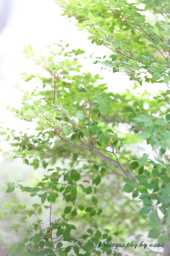 May-garden_MG_2407