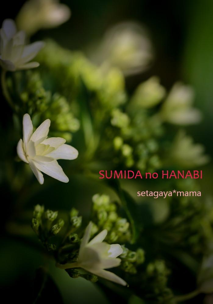 Sumida _MG_1363