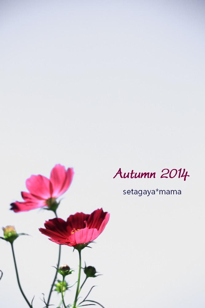 autumn 2014 IMG_7296