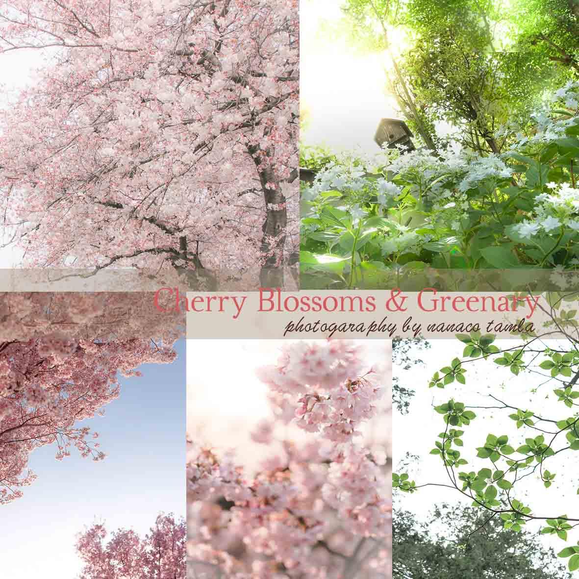 ストアーズ用 桜&グリーン