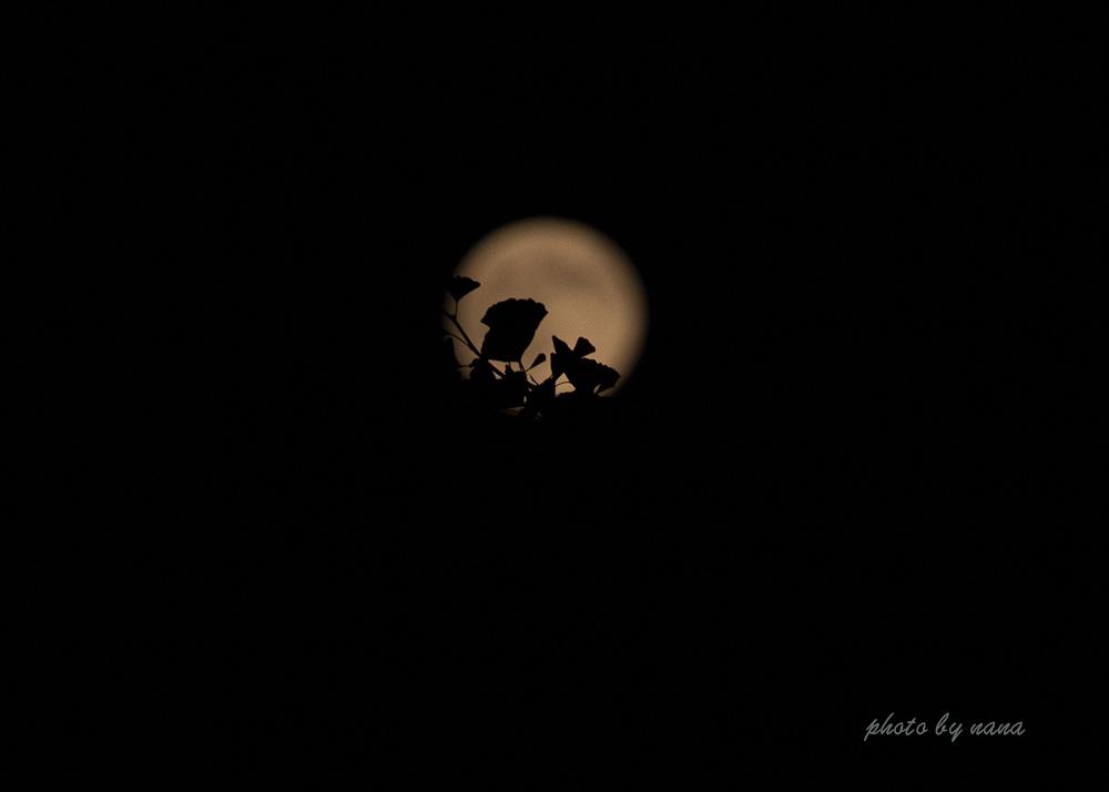 blue-moon-W03A8878