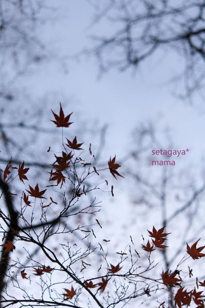 雲場池 夕焼け IMG_6817