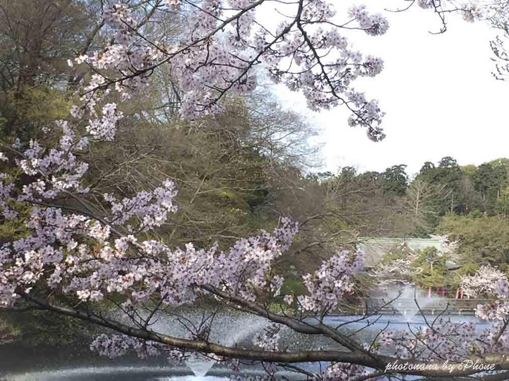 桜S__4415502