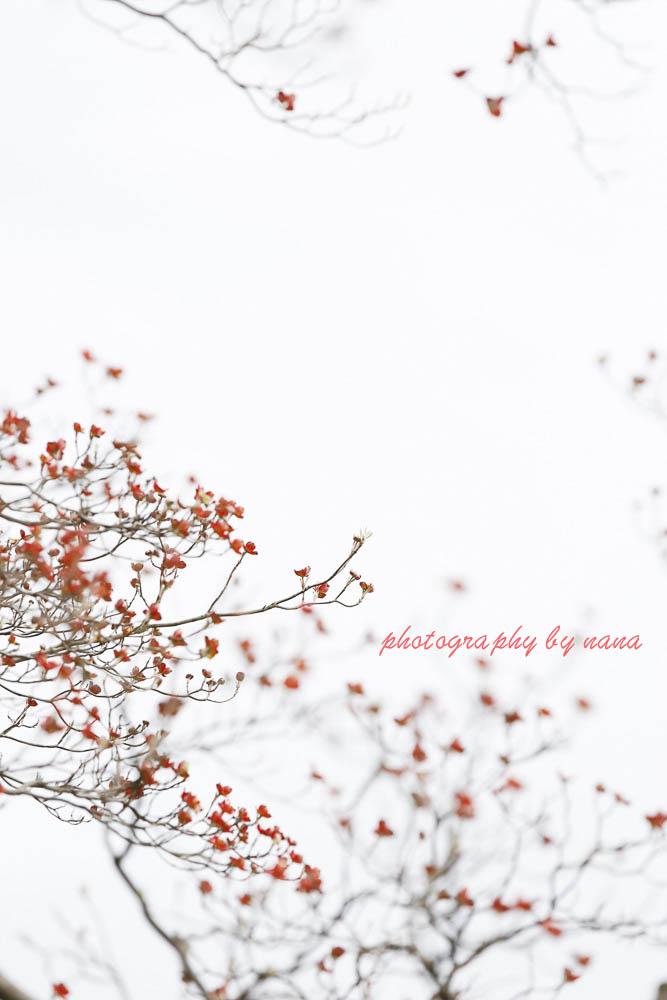 桜散る_MG_1157