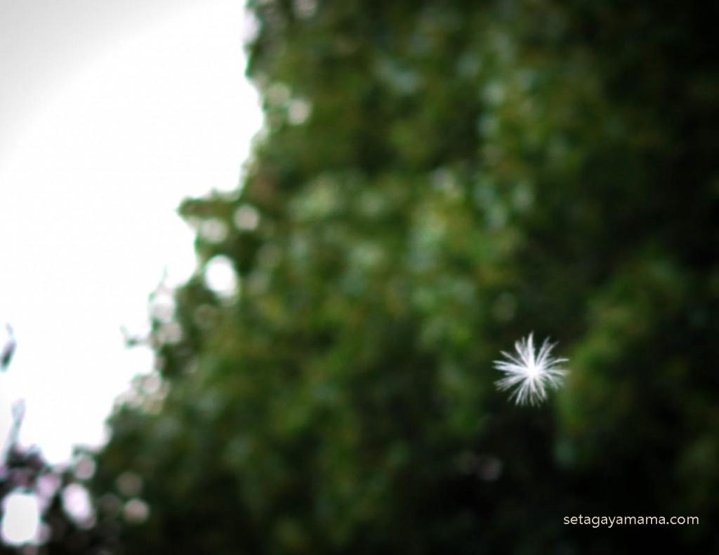 夏の終わり IMG_1045