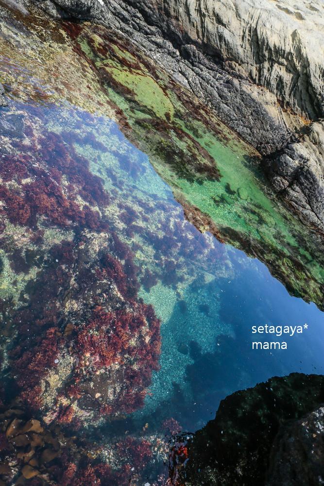 clear ocean _MG_4123