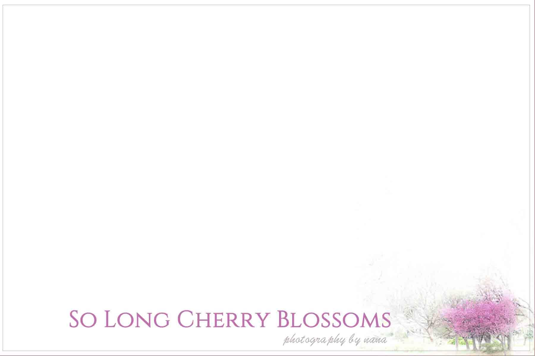 桜散る1のコピー