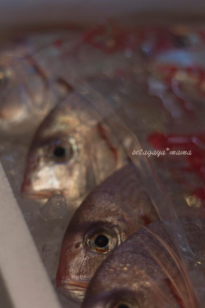 fish-market-IMG_4601