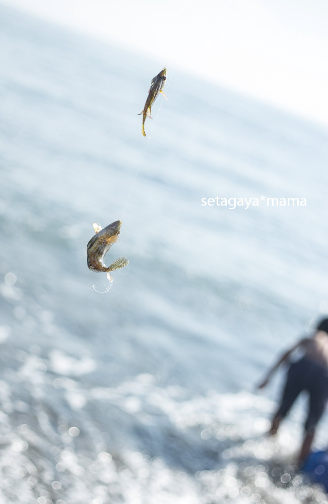 fishing _MG_7133
