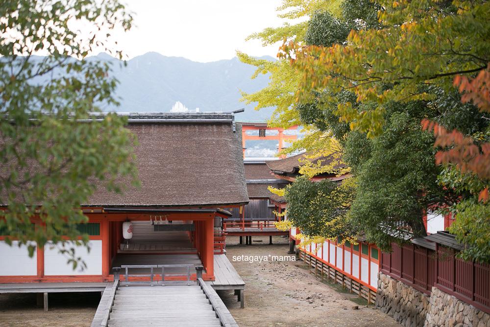 itsukushima_MG_0038