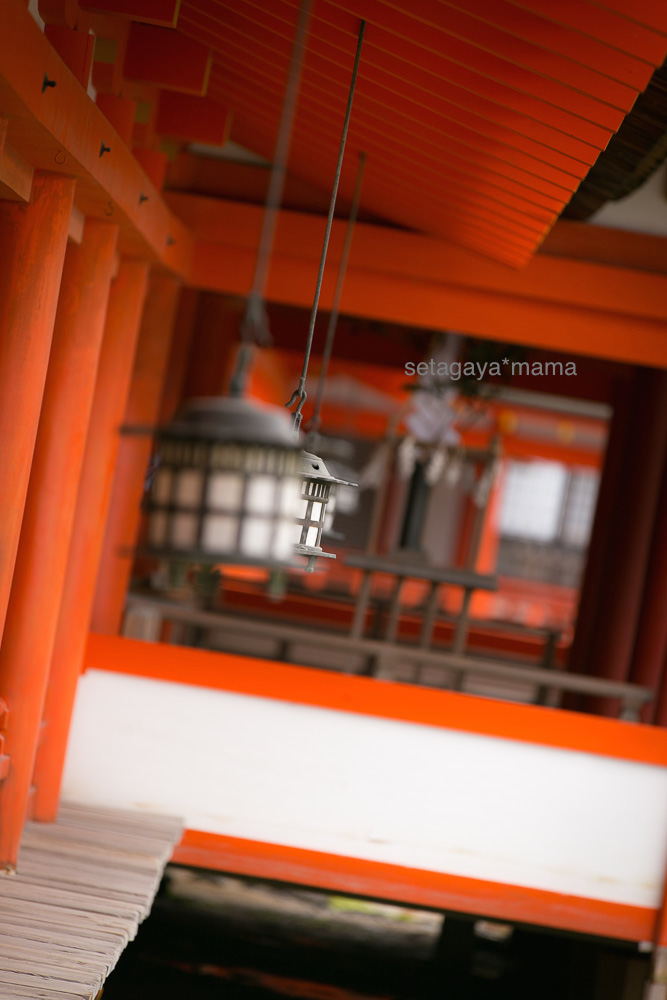 itsukushima_MG_9697