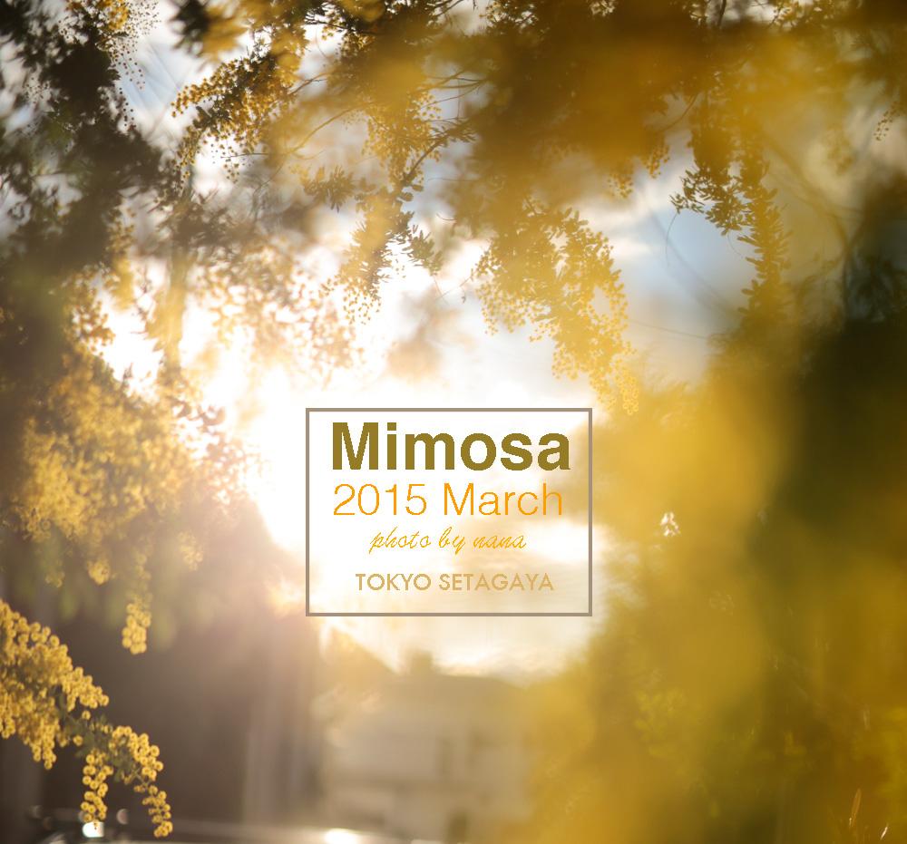 mimosa_MG_8409
