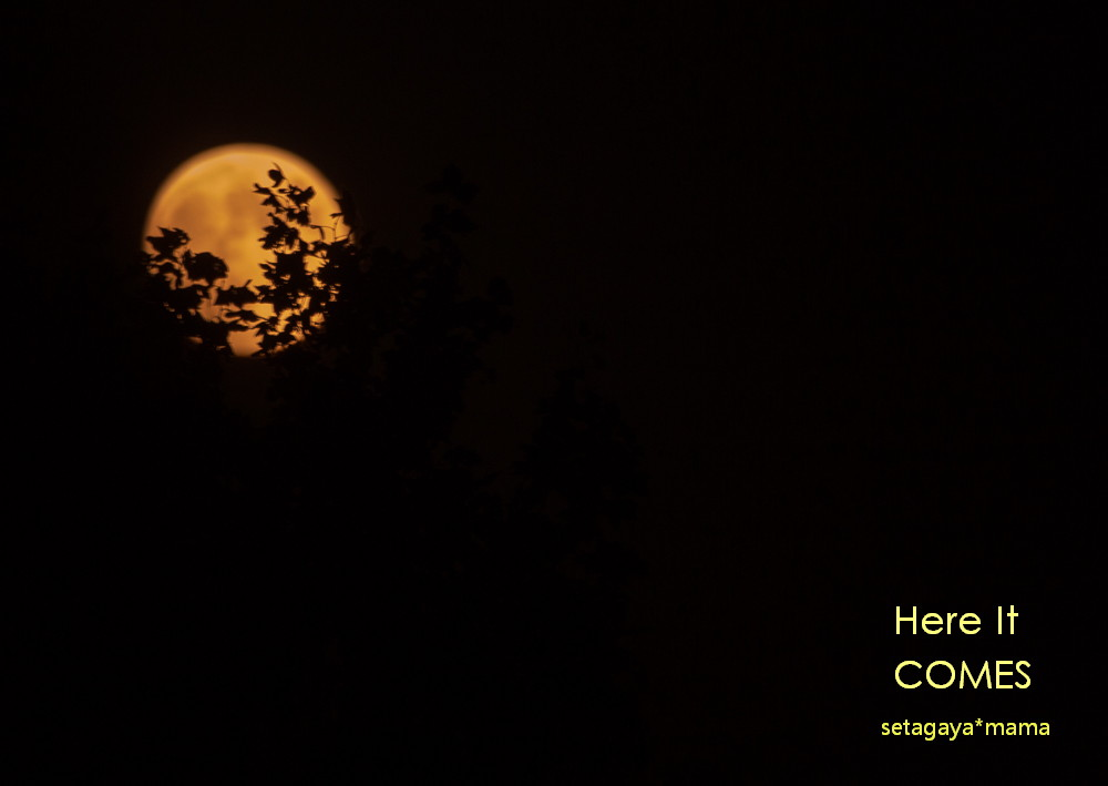 moon _MG_7800