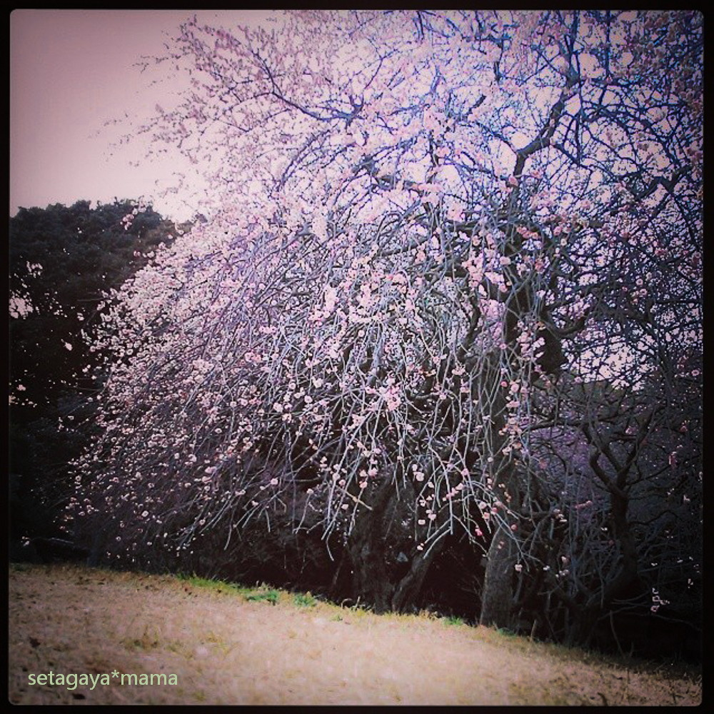 plumtree in Komazawa instagram