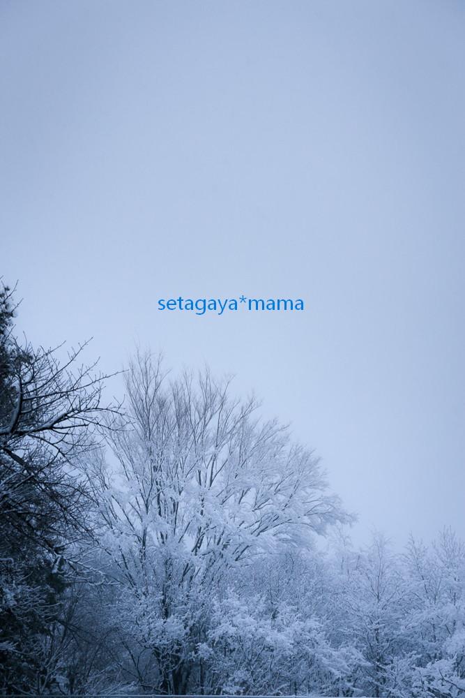 snow2014 _MG_2941