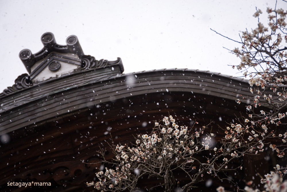 snowing kyoto_MG_4743