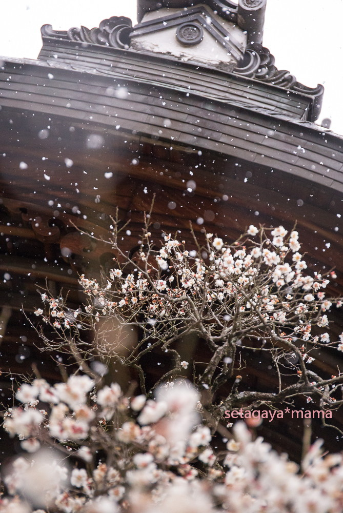 snowing kyoto_MG_4752