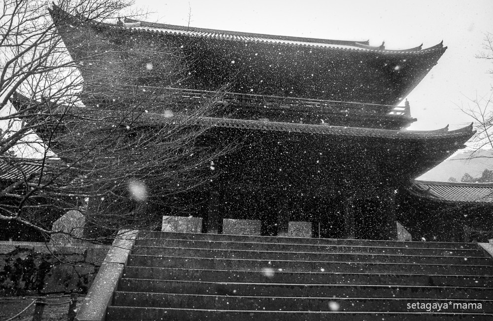 snowing kyoto_MG_4770