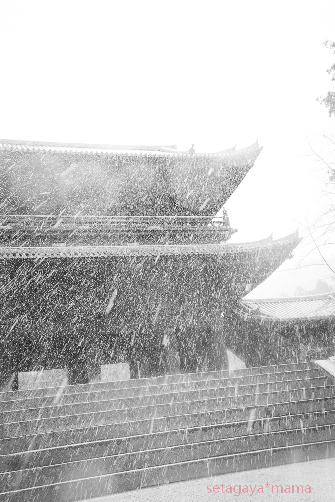 snowing kyoto_MG_4771